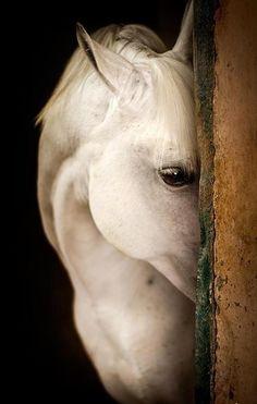 Elizabeth's horse