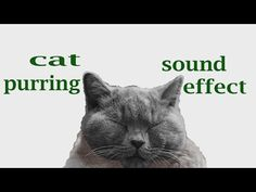 The Animal Sounds: Cat Purring - Sound Effect - Animation