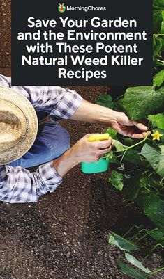 Natural Weed Killer Recipes to Save Your Garden and the Environment - natural plant fertilizer - Garden Weeds, Garden Plants, Weed Killer Homemade, Organic Weed Control, Weed Recipes, Garden Signs, Patio, Plant Care, Garden Planning