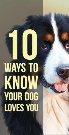 Tail wagging and following you around are obvious, but there are other ways to know your dog can't go one day without you. Read them here: http://www.i-heart-pets.com/10-ways-know-you-dog-loves-you/