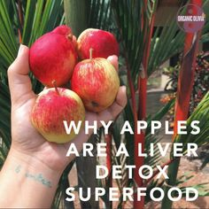 Why Apples Are an Overlooked Liver Detox Superfood – Organic Olivia (The Most Important Foods for Liver Stagnation + Liver Heat    apples, pears, watermelon, mint, asparagus, young plants such as sprouts, mung beans, tomato, broccoli, cauliflower, zucchini, carrots, raw honey, lemon, spinach, dandelion greens, celery, seaweed, kelp, lettuce, cucumber, mushroom, strawberries, fresh vegetables and fruits)
