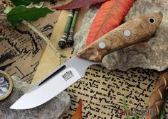 Bark River Knives: Adventurer Neck Knife - CPM 20CV - Curly Koa Burl - #2