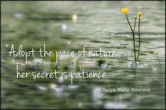 Patience is a virtue, and a door to beautiful things...❤️