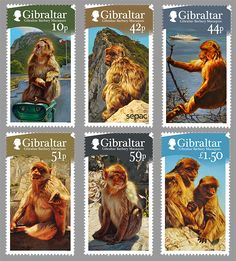 Gibraltar Barbary Macaques stamp issue