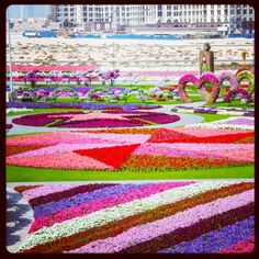 Dubai Miracle Garden! One of the first places I will visit when we get there!