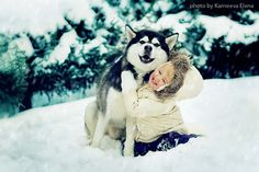 winter husky