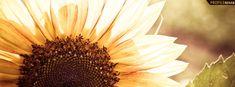 Google Image Result for http://www.profilerehab.com/facebook_covers/flowers/artistic_sunflower_cover_73.jpg