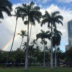 Sometimes #Waikiki can be a gross crowded mess. But sometimes you get a gorgeous #rainbow among #palmtrees, #beaches, and #condos to remind you how beautiful #Hawaii still is!