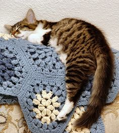 Sweet Sleeping Cat by 2Daz4U, via Flickr. And lovely blues and white crochet afghan.