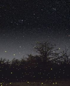 Best part of summer are the nights where the sky is full of stars and the fields are full of fireflies