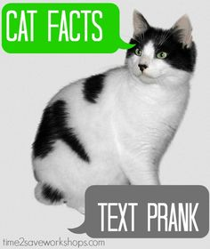 Cat Facts Prank – The best April Fool's prank I've EVER pulled!  You do it by texting from an unknown #.... My brother-in-law was really, really not expecting a subscription to cat facts to come his way - but boy did they!