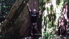 Magie stromů.  Které a proč je objímat.