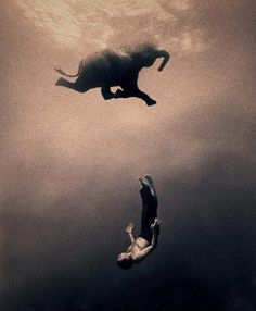 """""""In exploring the shared language and poetic sensibilities of all animals, I am working towards rediscovering the common ground that once existed when people lived in harmony with animals. The images depict a world that is without beginning or end, here or there, past or present."""" Gregory Colbert"""