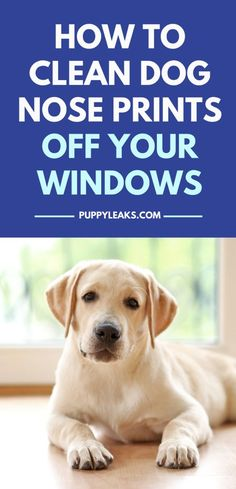 If your dog spends any time looking out the window chances are they're leaving a lot of drool & nose prints behind. Luckily there are a few methods that make cleaning them up pretty easy. Here's how to clean dog nose prints & drool off your windows. Dog Training Books, Dog Training Tips, Dog Care Tips, Pet Care, Dog Nose Print, Dog Health Care, Pet Fashion, Fashion Clothes, Pet News