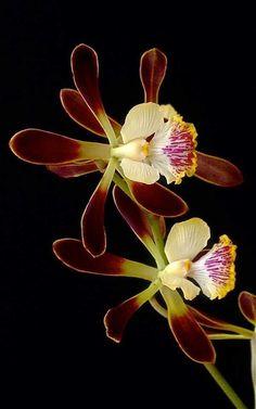 Flowers and nature.ดอกไม้กับธรรมชาติ - Comunidad - Google+
