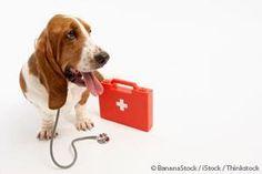 Pet Earthquake Preparedness Kit