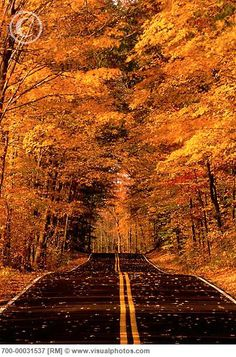 I can just imagine driving up this road with my home at the end!