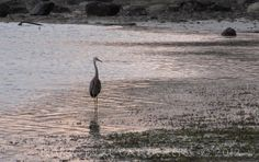 There is something about the tide, and the lone water bird walking along the shore.
