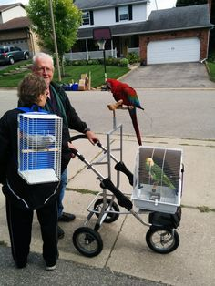 25 Ridiculous Neighbors That You'll Be Glad Aren't Yours - The internet has generated a huge amount of laughs from cats and FAILS. And we all out of cats. Hover Cat, Diy Bird Toys, Pet Bird Cage, Parrot Toys, Parrot Bird, Budgie Toys, Parrot Pet, Budgies, Parrots