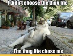 funny-pictures-auto-cat-thug-388954.jpeg 540×421 pixels