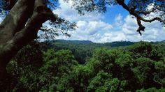 Jungles | Planet Earth | BBC America
