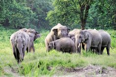 It is estimated that India is home to about 3,600 captive elephants, and most of them are under the care of private individuals, including temples.
