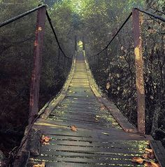 wood plank bridge