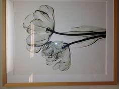 X-rayed flowers