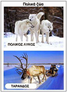 Ιδέες για το νηπιαγωγείο(εποπτικό υλικό,δραστηριότητες,κατασκευές). Polo Norte, Polar Animals, Greek Language, Preschool Education, Animal Crafts, In Kindergarten, Continents, Alaska, Camel