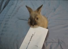 In short, bun buns are the most awesome, intelligent, adorable companions you may have never considered owning. | 21 Reasons Why Bunnies Are Actually The Best Pets