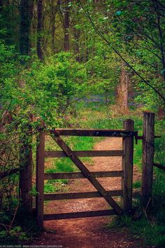 Gate at the Forest of Dean, Gloucestershire, England