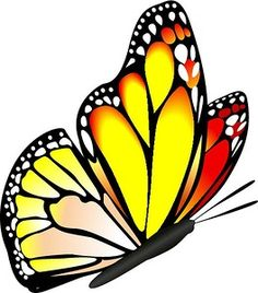 Image result for clip art butterfly