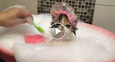 Esqueça Tudo o Que Já Viu, a Hora Do Banho Deste Gato é Simplesmente… Diferente!!