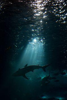 "♂ Underwater world ""sharks patrol these waters"""