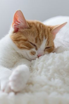 """""""The cat...pretends to sleep to see thee more clearly."""" --Francois Rene Chateaubriand"""