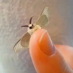 Cute Little Animals, Cute Funny Animals, Funny Cute, Cute Creatures, Beautiful Creatures, Animals Beautiful, Cute Moth, Cute Reptiles, Cute Animal Videos