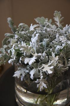 whole bunch of dusty Winter Flowers, Summer Flowers, Dusty Miller, Event Decor, Garden Inspiration, How To Dry Basil, Fall Wedding, Florals, Wedding Flowers