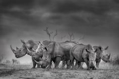 Stormy Future - World Rhino Day...we can never let the light Fade on these incredible animals!!!!