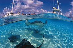 Hit the renowned Boatswain's Beach in Grand Cayman, home to friendly sea turtles galore