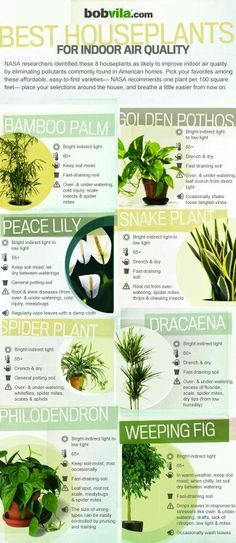 Air Purifying Plants: Best houseplants for indoor air quality Inside Plants, Cool Plants, Air Plants, Garden Plants, Veg Garden, House Plants Air Purifying, Nature Plants, Foliage Plants, Small Plants