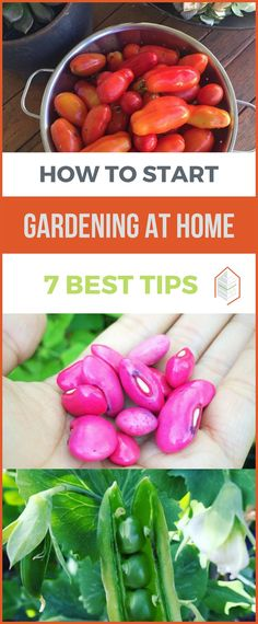 If you are thinking about how to start gardening at home, you will be glad to know that it is not hard. Gardening needs some experience to harvest success. #urbangardening #urbanfarming #gardening #diy #garden #ugrpost