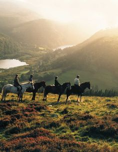 irish horse | Epona's Pastures - Irish Draught Horse Tour (Ireland) July-August…