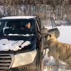 - Tiere Hey buddy, can I get a lift? - Tiere - Hey buddy, can I get a lift? - Tiere - Cats and Kittens Pics Cute Little Animals, Cute Funny Animals, Cute Cats, Cute Animal Videos, Funny Animal Pictures, Funny Pics, Beautiful Cats, Animals Beautiful, Super Cat