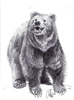 10 besten A Teenagers Guide to Survival: bear illustration research ...