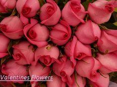 http://washingtondc.eventful.com/events/half-casket-spray-/E0-001-092531573-0@2016040813  Casket Blanket   Casket Sprays,Casket Flowers,Casket Spray,Flowers For Casket,Funeral Casket Sprays,Funeral Casket Flowers,Casket Flower Arrangements,Casket Spray Flower Arrangements,Casket Sprays For Funerals,Casket Sprays For Men,Cheap Casket Sprays,Casket Flowers Arrangements,Casket Arrangements,Casket Blanket,Casket Floral Arrangements,Casket Sprays For Mother