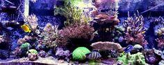Hershel McAlister's (Ocean View) 280 US-gallon Reef Aquarium #aquarium