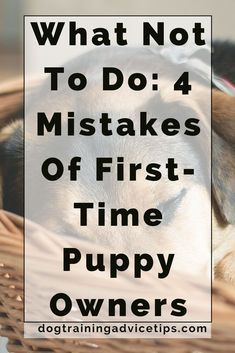 Dog Obedience Training - Having a dog or a puppy is a huge responsibility. Find out the 4 Mistakes Of First-Time Puppy Owners and what not to do. Puppy Potty Training Tips, Dog Training Methods, Dog Training Techniques, Training Your Dog, Training Classes, Leash Training, Toilet Training, Training Programs, Kennel Training A Puppy