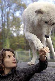 donne e lupi - Cerca con Google
