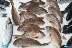 Πάνω από πέτρες και χαλίκια, σε βραχώδεις, ακόμα και σε αμμώδεις, βυθούς, το φαγκρί κόβει βόλτες, αναζητώντας διάφορα άλλα μικρά ψάρια, καρκινοειδή, και μαλάκια, τα οποία και αποτελούν το…διατροφικό του μενού!  Επειδή, νοστιμότερο φαγκρί, σίγουρα δε θα βρείτε αλλού, τηλεφωνήστε μας στο ☎ Delivery: 2310232228!