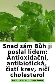 Samos, Cholesterol, Herbs, Health, Food, Fitness, Salud, Herb, Meals